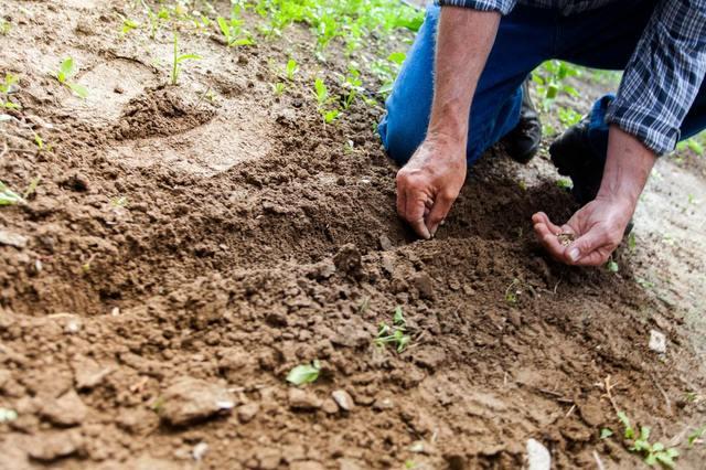 新しい農業のあり方、フランチャイズ農業とは?
