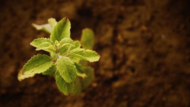 """""""成長段階の植物"""""""
